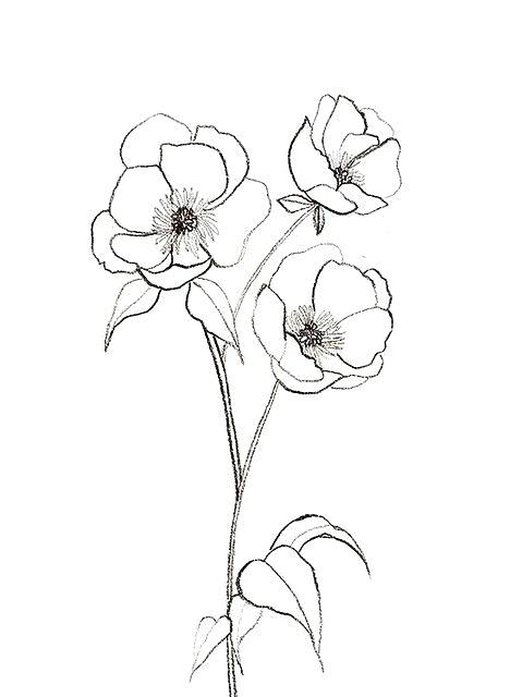 468x640 Simple Flowers Drawing Flower Sketches By Ca Poppy Tattoo Media