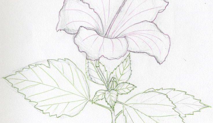 736x425 Easy Flower Drawings In Pencil Best 25 Pencil Sketches Of Flowers