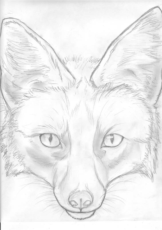 566x800 Fox Face Sketch By Kunzai