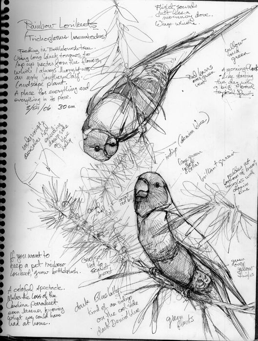 529x700 Draw A Bird, Own A Bird Bird Sketch, Bird And Nature Journal