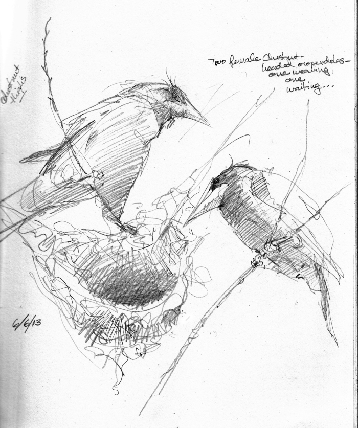 700x837 Panamaarro Colorado Island Sketchbook 2013 Panama, Sketchbooks