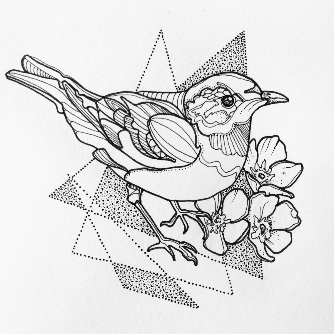 1136x1136 Bird Drawing
