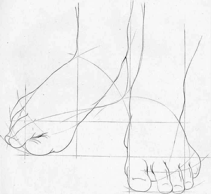 698x642 Sketches Of Human Anatomy