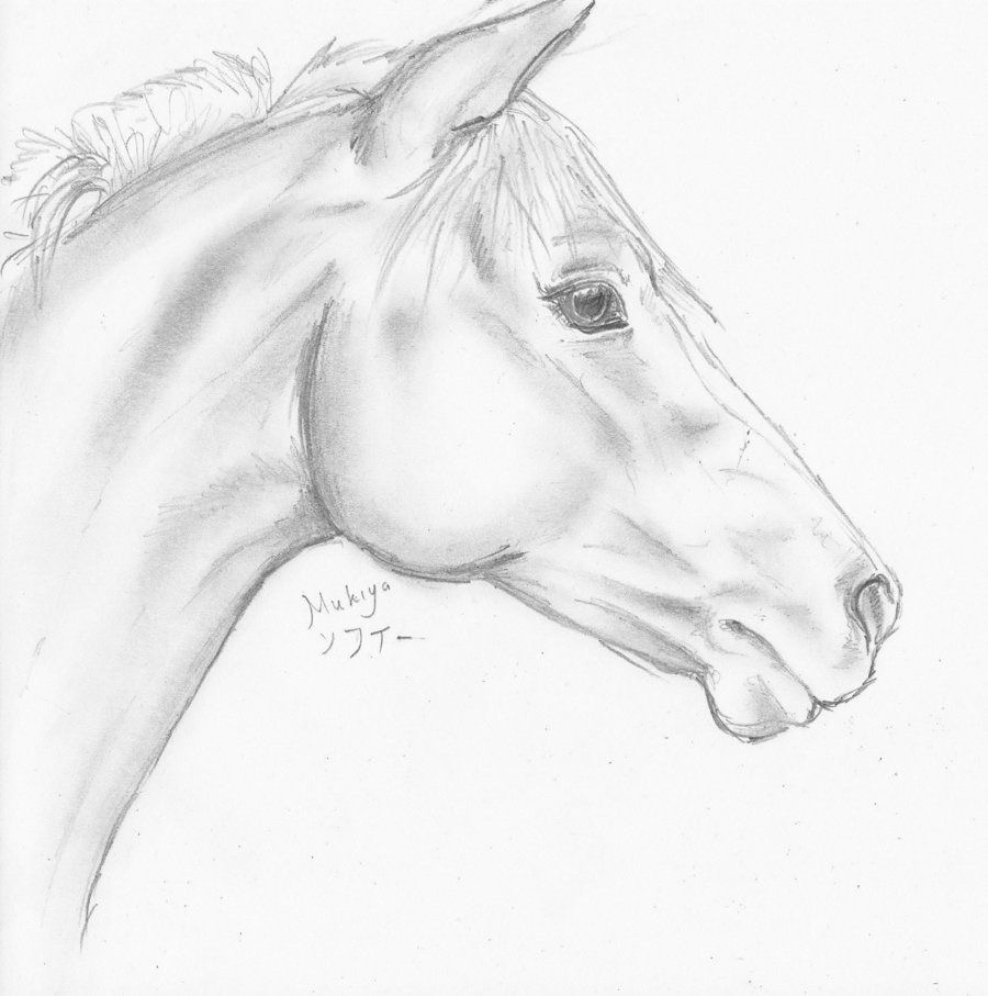 900x907 Pin By Ann Stolberg On Horse Paintings Horse, Draw