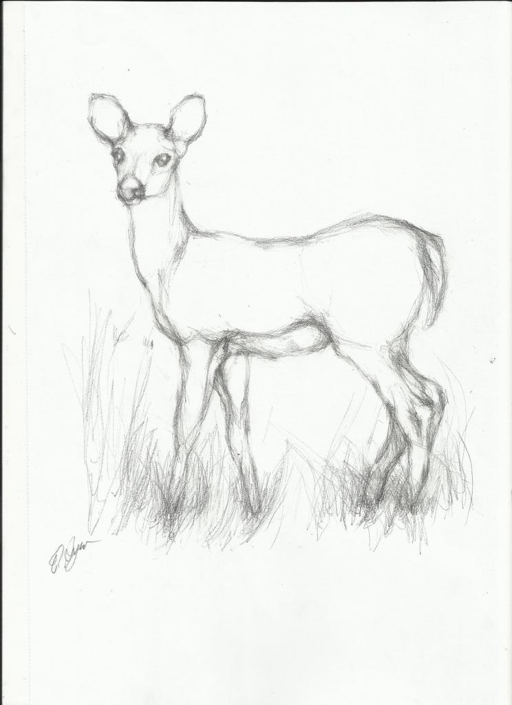 744x1024 Animals Pencil Drawings Pencil Sketch Nightwithdeer
