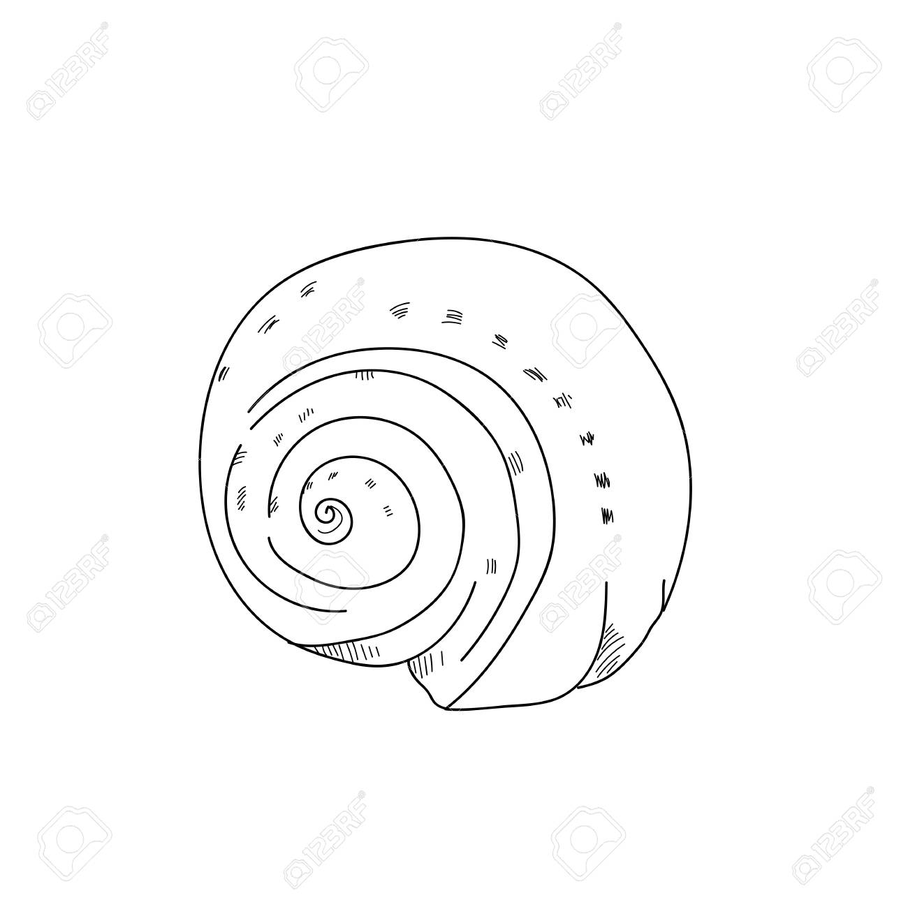 1300x1299 Shellfish Drawing.black And White Line Sketching Illustration