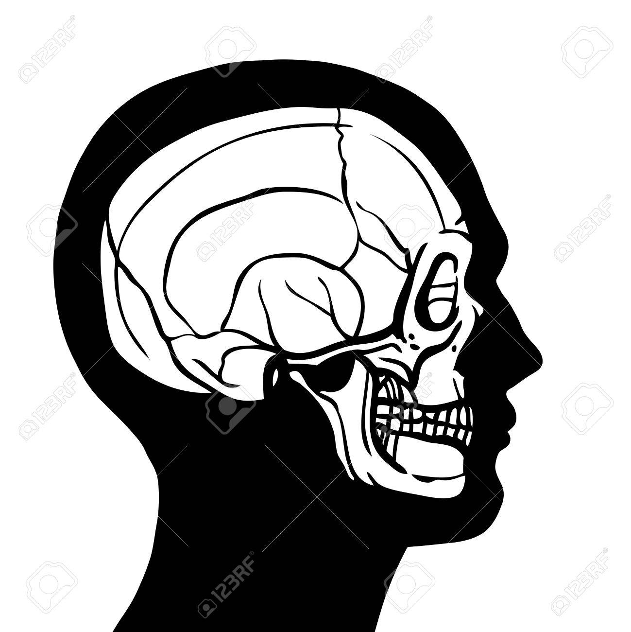 1299x1300 Human Head Profile Contour With Skull Inside Anatomy Concept