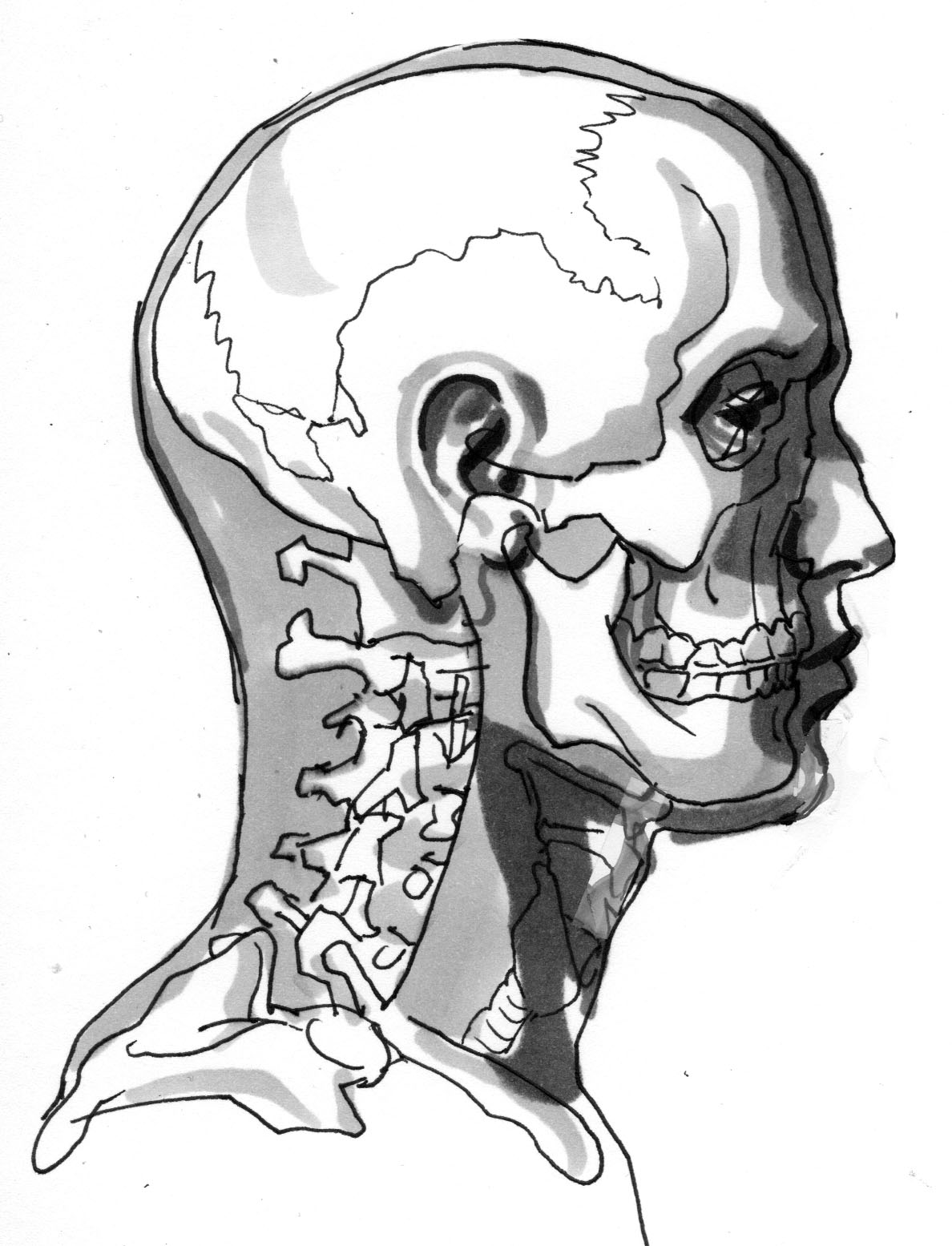 1188x1555 November Studies 4 Profile Skull With Flesh Jake Nelson Art