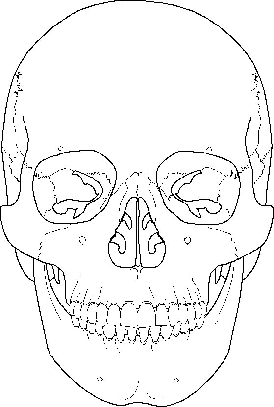 Skull Anatomy Drawing