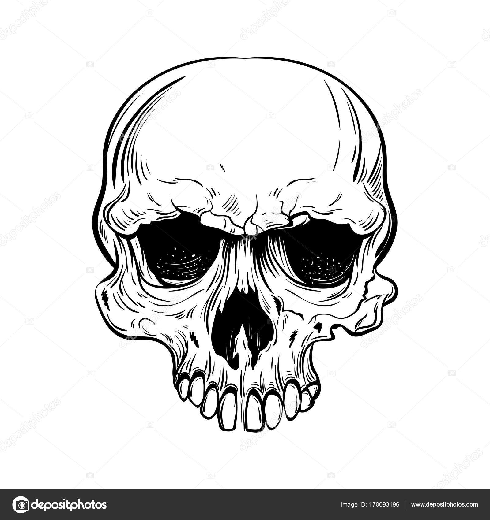 1600x1700 Hand Drawn Anatomy Skull Vector Stock Vector K Ssss