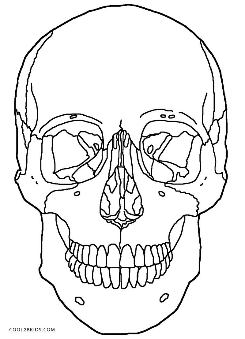 800x1108 Anatomy Skull Coloring Pages Printable Sugar Skulls Coloring