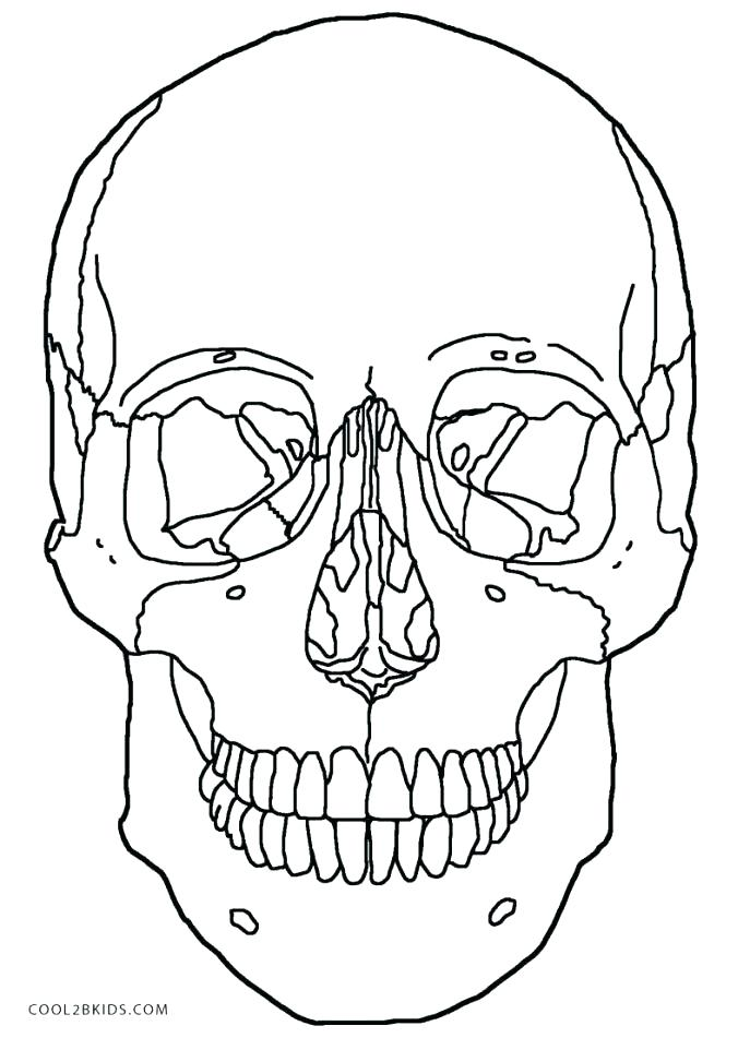 687x951 Skull Bones Anatomy Coloring Pages Skull Coloring Pages Anatomy
