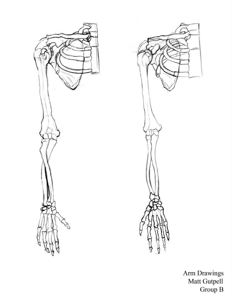 791x1024 Drawn Bones Arm Drawing