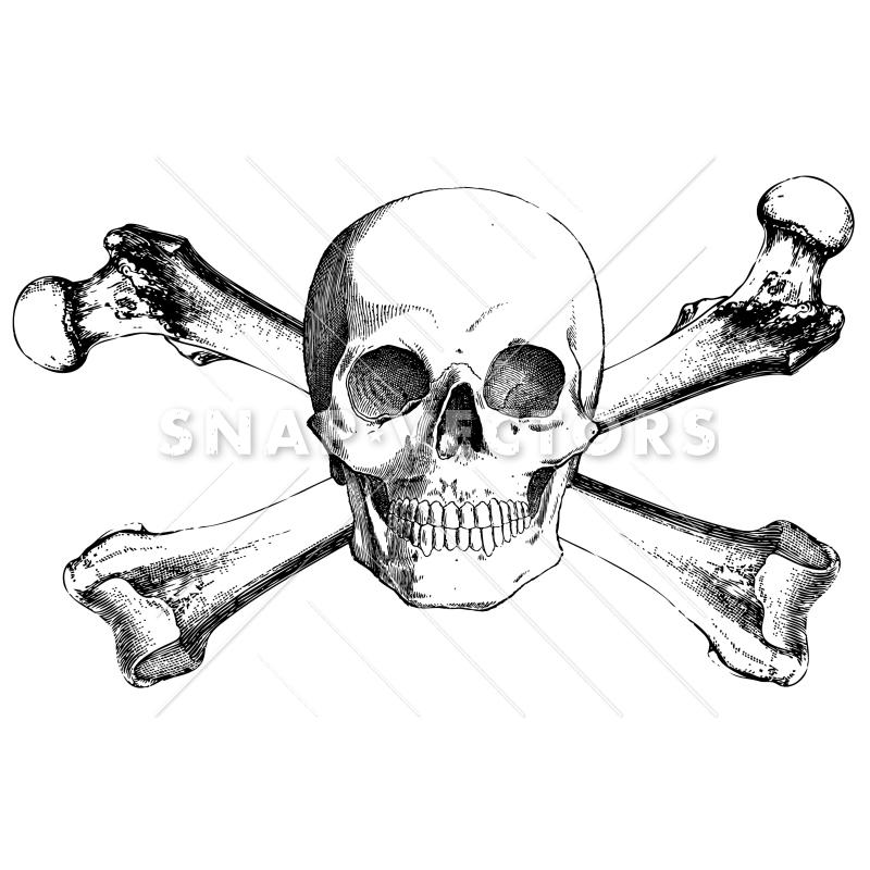 800x800 Vector Clipart Realistic Skull And Crossbones