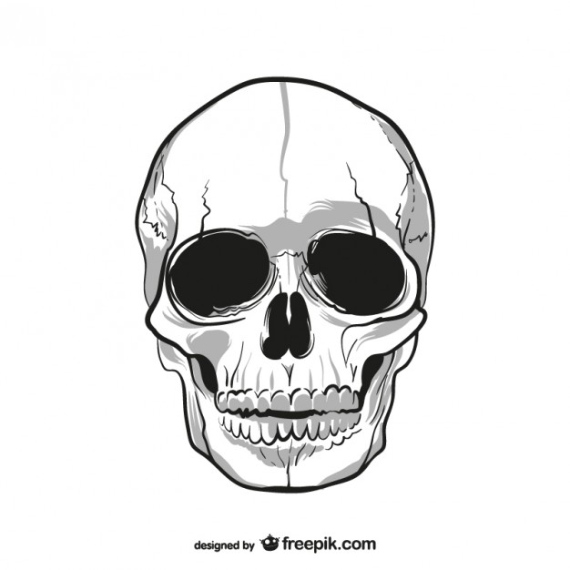 626x626 Human Skull Drawing Vector Free Download