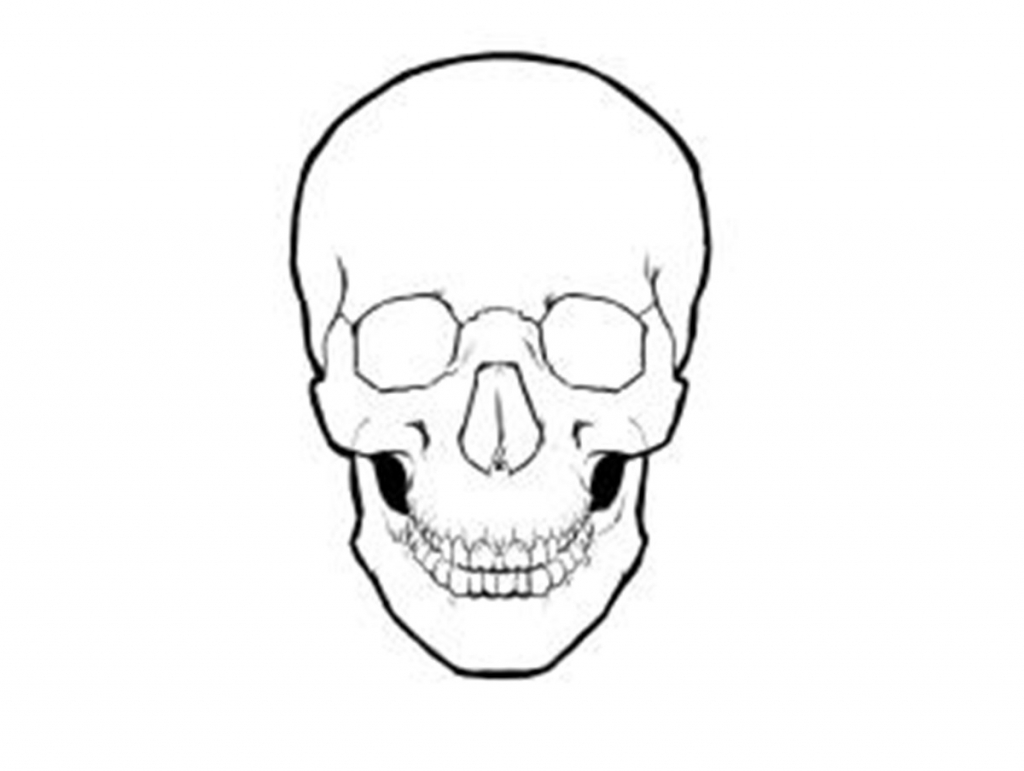 1024x771 Simple Skull Drawing