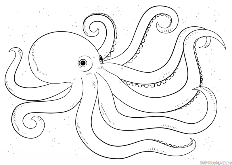 807x575 Coloring Pages Lovely Octopus Drawings Skull Drawing Coloring