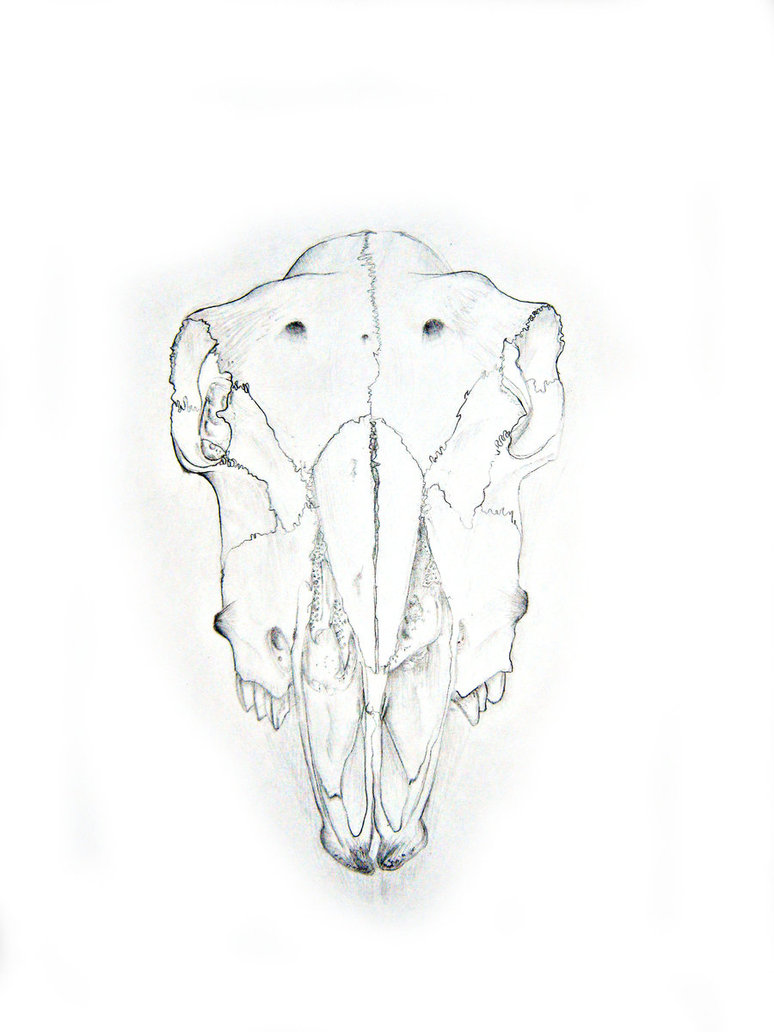 774x1032 Sheep Skull By Theonetruelegend