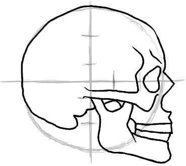 Skull Profile Drawing