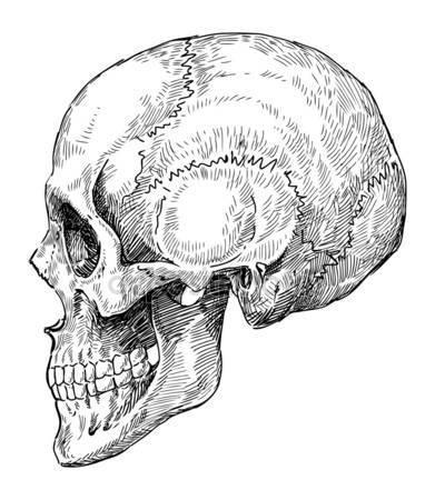 391x450 Sketch Side View Skull Stock Vector Nikiteev