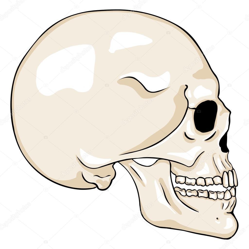 1024x1024 Cartoon Side View Skull Stock Vector Nikiteev