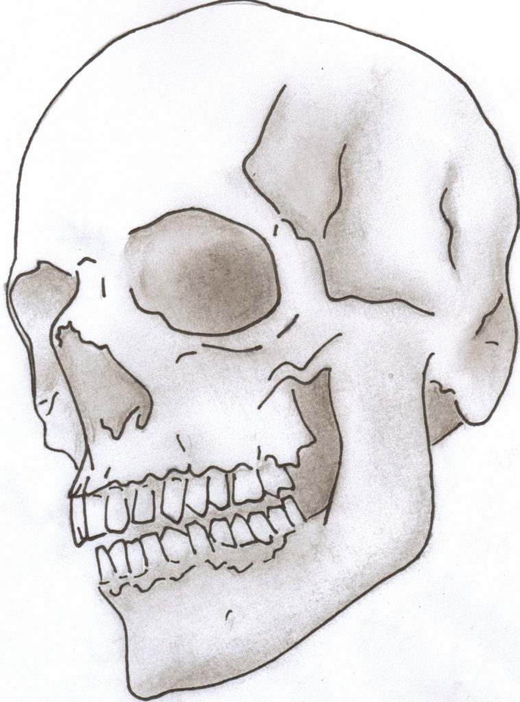 Skull Simple Drawing At Getdrawings Com Free For Personal Use