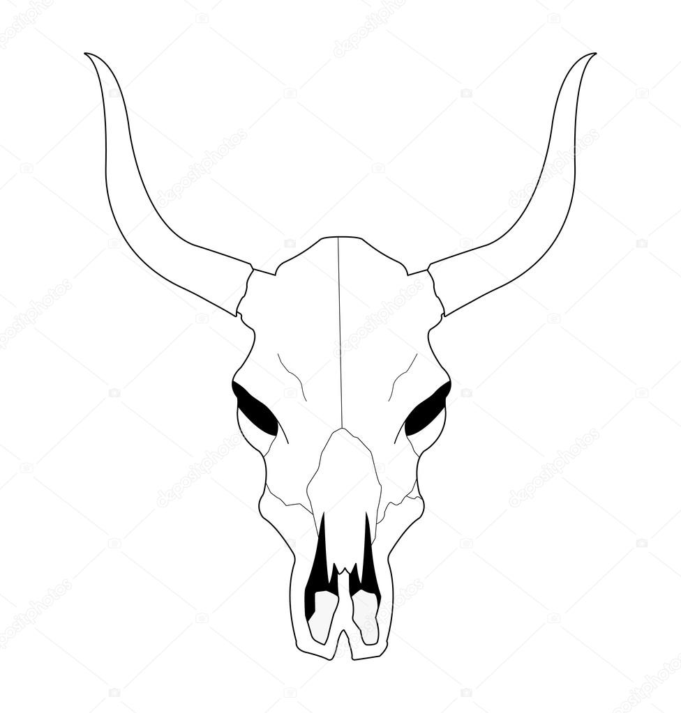 976x1023 Cow Skull With Horns Stock Vector Bsd