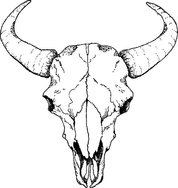604x640 Buffalo Skull Drawings