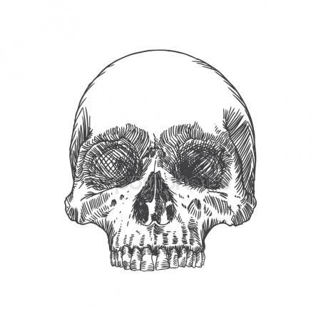 450x450 Hand Drawing Skull Sketch Stock Vector Goldenshrimp