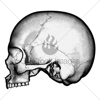 325x325 Skull Retro Style Drawing Gl Stock Images