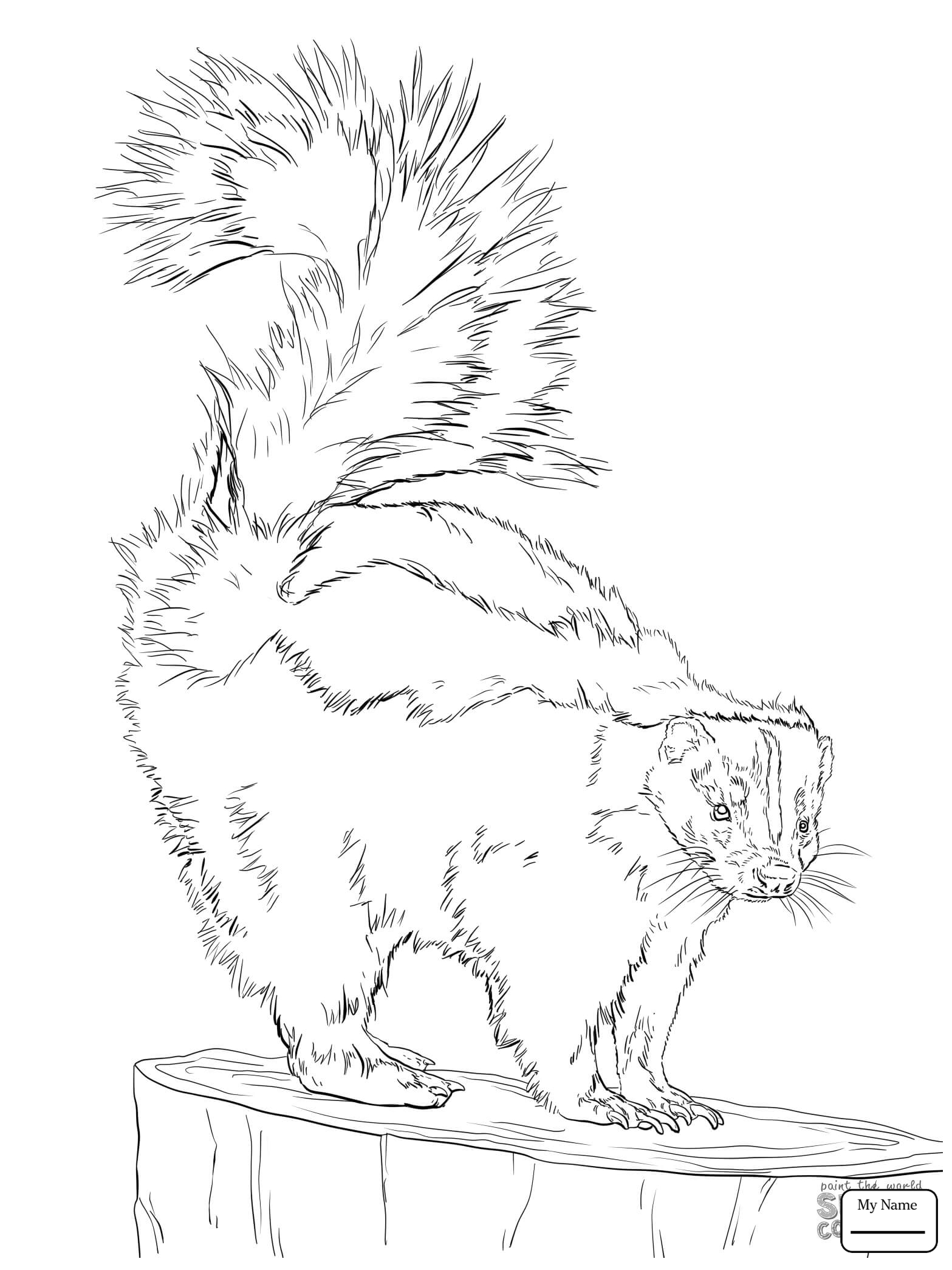 1567x2089 Eastern Spotted Skunk Mammals Coloring Pages