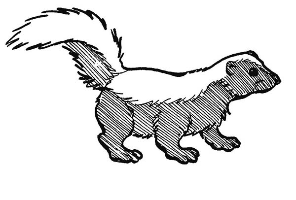 Skunk Line Drawing At Getdrawings Com Free For Personal Use Skunk