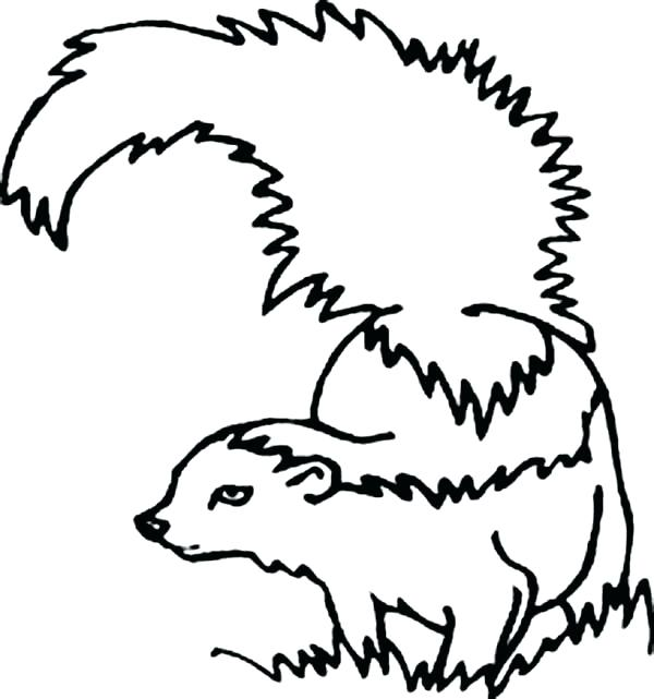 Skunk Line Drawing at GetDrawings.com | Free for personal use Skunk ...