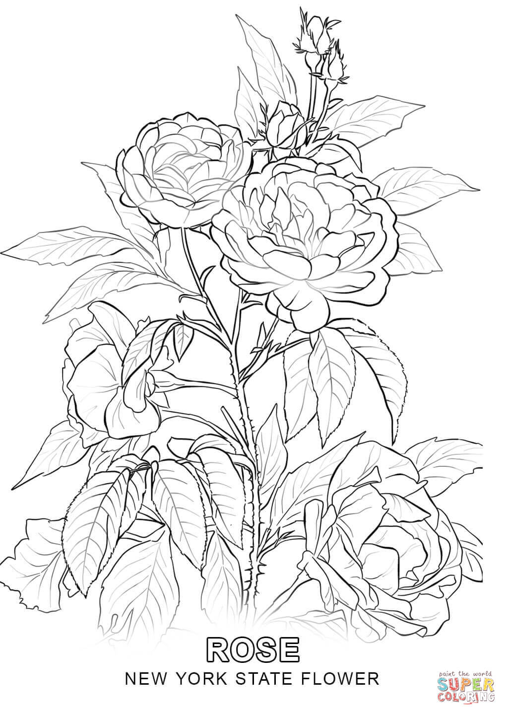 1020x1440 New York State Flower Coloring Page Free Printable Coloring Pages