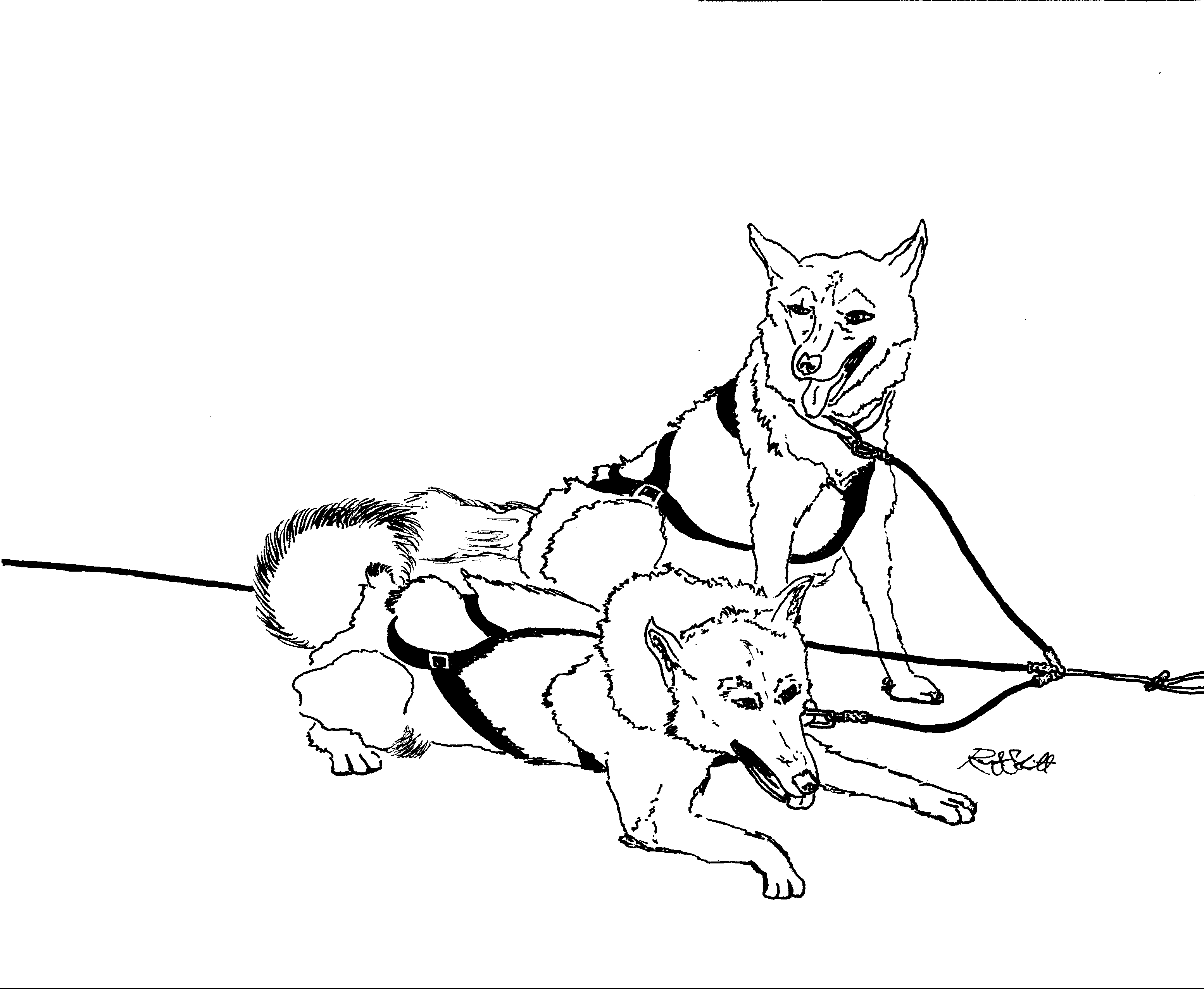 Sled dog drawing at free for personal for Sled coloring page