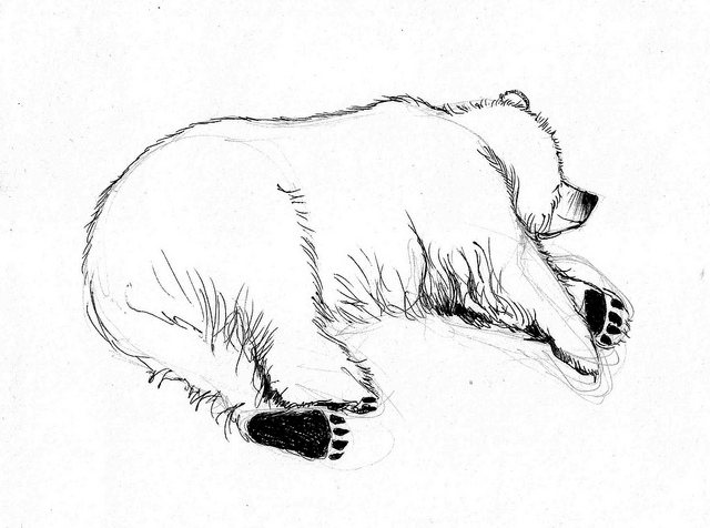 640x476 Sleeping Bear Sketch From Life Bear Sketch, Sketches And Bears