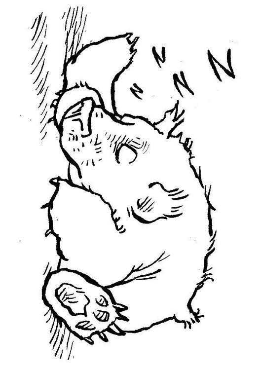531x750 Coloring Page Sleeping Bear