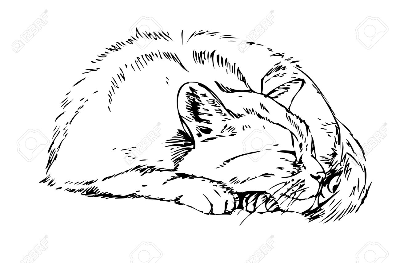1300x857 Sleeping Cat. Sketch On White Background Royalty Free Cliparts