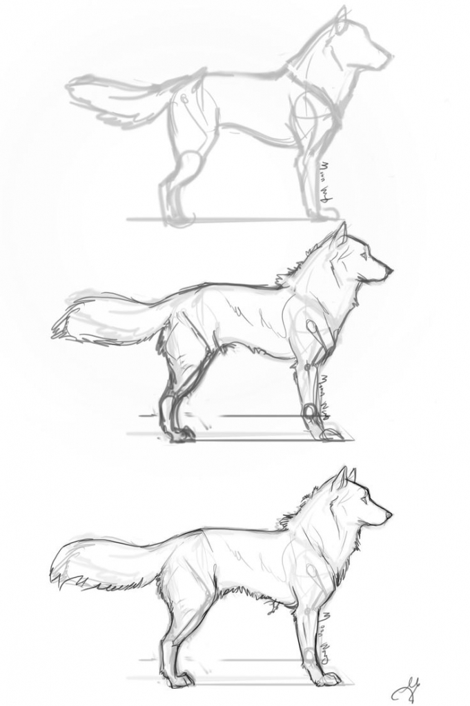 681x1024 Drawing A Dog Step By Step How To Draw A Sleeping Dog Sleeping Dog