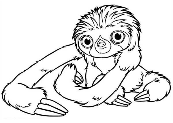 Sloth Drawing