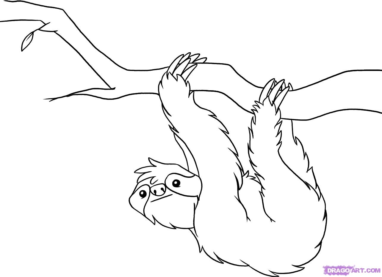 1284x933 How To Draw A Sloth, Step By Step, Rainforest Animals, Animals
