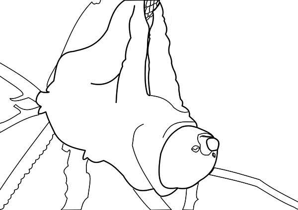 600x424 Kids Drawing Of Sloth Coloring Page Color Luna