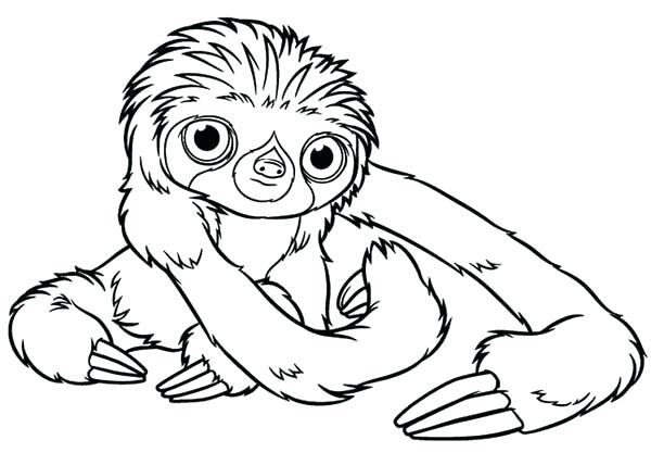 600x428 Minimalist Sloth Coloring Page Online