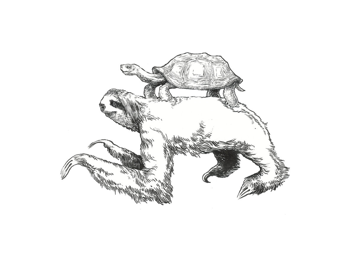 1200x857 Sloth Amp Turtle