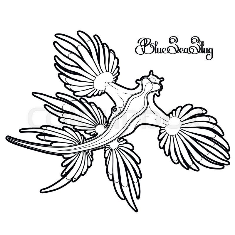 800x800 Glaucus Atlanticus. Blue Sea Slug Drawn In Line Art Style. Blue