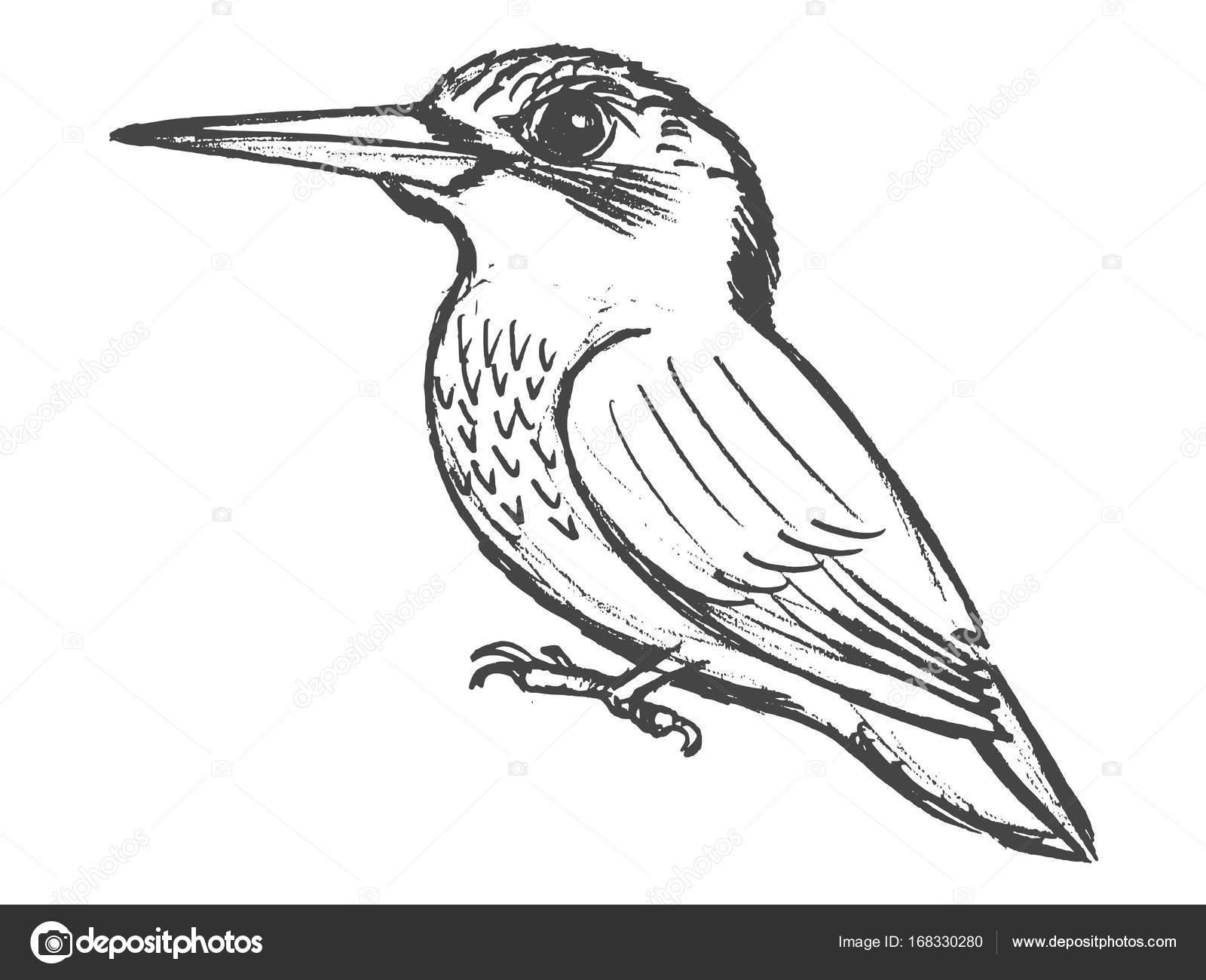 1600x1300 Small Bird Kingfisher Stock Vector Perysty