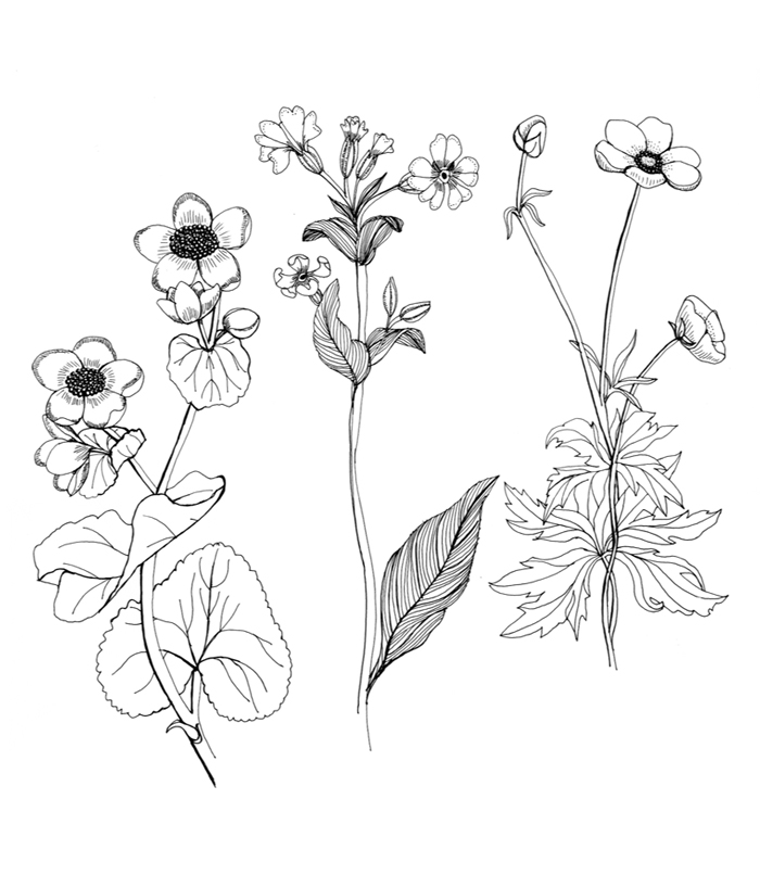 It is a photo of Versatile Small Flower Drawing