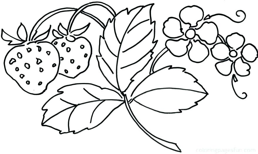 878x525 Flower Coloring Pages Printable Free Flower Coloring Pages
