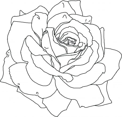 519x500 Coloring Pages ~ Flower Coloring Pages Printable Hard For Girls