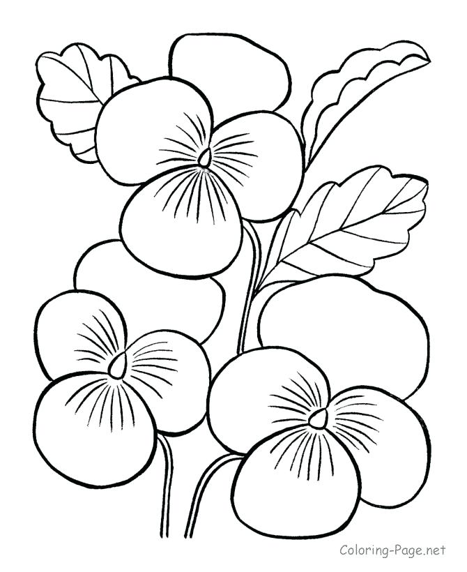 670x820 Jasmine Flower Coloring Pages Genesisar.co